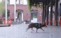 video: DocSend Dachshund Delivery